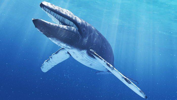 Bitcoin Balinaları Atağa Kalktı